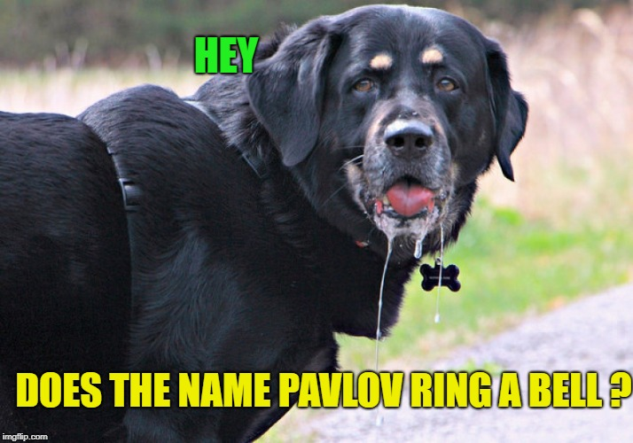 Get it? Pavlov's dog? | DOES THE NAME PAVLOV RING A BELL ? HEY | image tagged in memes,funny,dog,science | made w/ Imgflip meme maker