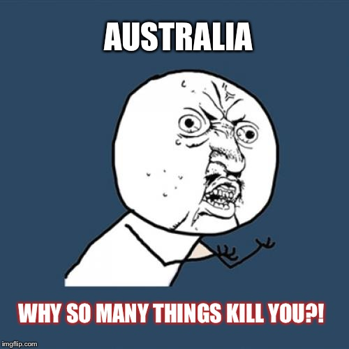 Y U No Meme | AUSTRALIA WHY SO MANY THINGS KILL YOU?! | image tagged in memes,y u no | made w/ Imgflip meme maker