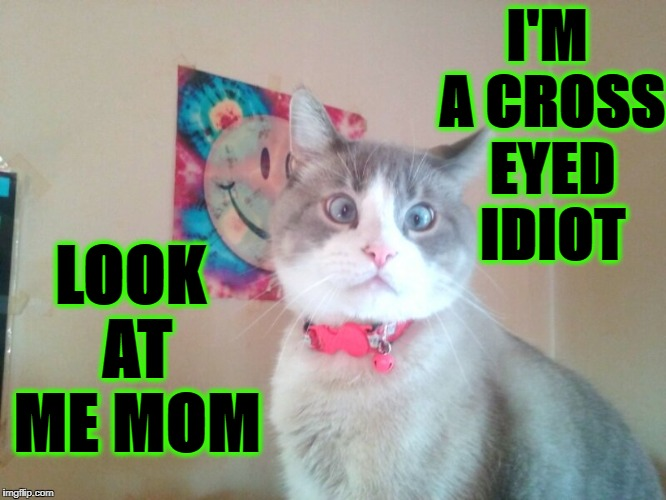 I'M A CROSS EYED IDIOT LOOK AT ME MOM | image tagged in giant retard cat | made w/ Imgflip meme maker