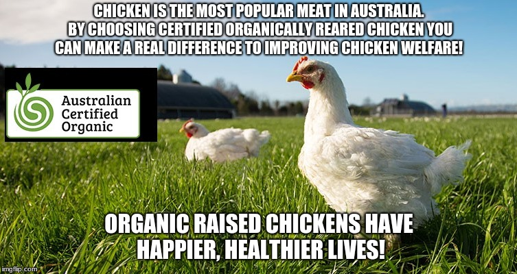 CHICKEN IS THE MOST POPULAR MEAT IN AUSTRALIA. BY CHOOSING CERTIFIED ORGANICALLY REARED CHICKEN YOU CAN MAKE A REAL DIFFERENCE TO IMPROVING  | image tagged in organic,chicken,animal,welfare,vegan,vegetarian | made w/ Imgflip meme maker