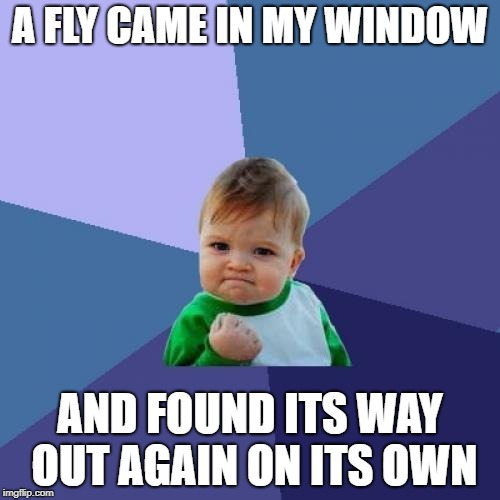 Must be the smartest fly in recorded history! | A FLY CAME IN MY WINDOW AND FOUND ITS WAY OUT AGAIN ON ITS OWN | image tagged in memes,success kid | made w/ Imgflip meme maker