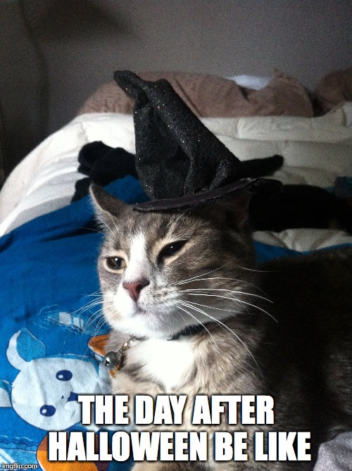 THE DAY AFTER HALLOWEEN BE LIKE | image tagged in cats,halloween | made w/ Imgflip meme maker