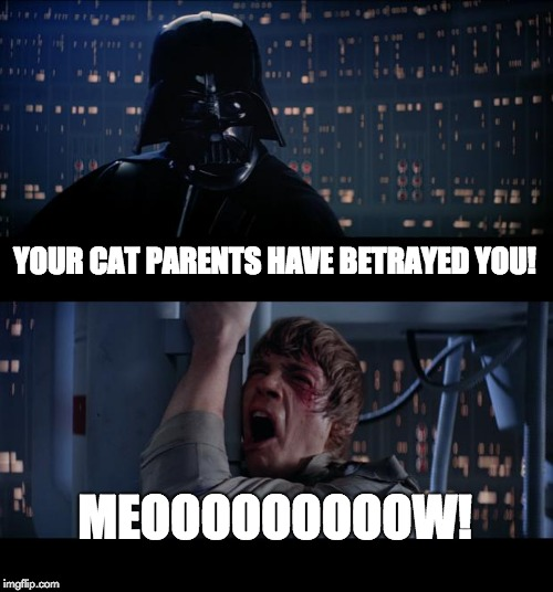 Star Wars No Meme | YOUR CAT PARENTS HAVE BETRAYED YOU! MEOOOOOOOOOW! | image tagged in memes,star wars no | made w/ Imgflip meme maker