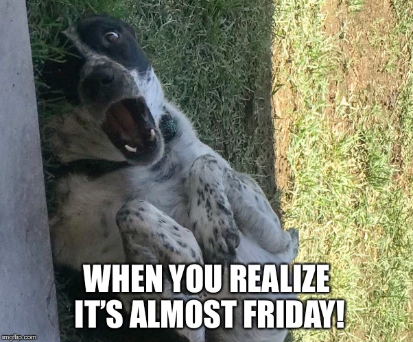 Almost Friday  | WHEN YOU REALIZE IT'S ALMOST FRIDAY! | image tagged in friday,dog,funny,thursday | made w/ Imgflip meme maker