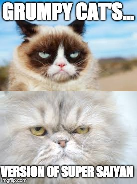 HE IS NO LONGER ANY ORDINARY GRUMPY CAT!!!! | GRUMPY CAT'S... VERSION OF SUPER SAIYAN | image tagged in grumpy cat memes | made w/ Imgflip meme maker