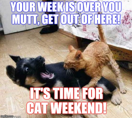 Announcing Cat Weekend, May 11-13, a Landon_the_memer, 1forpeace, & JBmemegeek event! | YOUR WEEK IS OVER YOU MUTT, GET OUT OF HERE! IT'S TIME FOR CAT WEEKEND! | image tagged in jbmemegeek,cat weekend,1forpeace,cats,dogs,dog week | made w/ Imgflip meme maker
