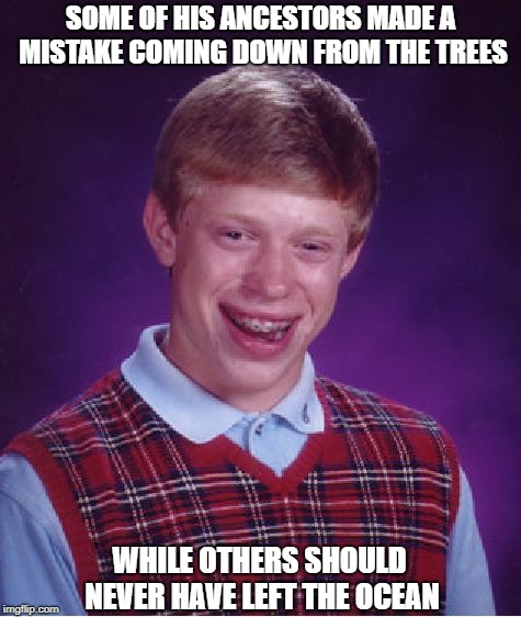 Lessons From an Ancestry Website | SOME OF HIS ANCESTORS MADE A MISTAKE COMING DOWN FROM THE TREES WHILE OTHERS SHOULD NEVER HAVE LEFT THE OCEAN | image tagged in memes,bad luck brian | made w/ Imgflip meme maker