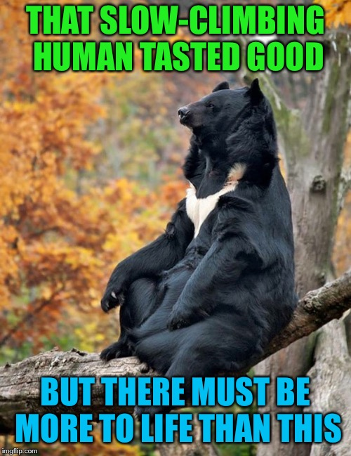 Getting his bear-ings straight | THAT SLOW-CLIMBING HUMAN TASTED GOOD BUT THERE MUST BE MORE TO LIFE THAN THIS | image tagged in bear,contemplating,the meaning of life,after,eating,person | made w/ Imgflip meme maker