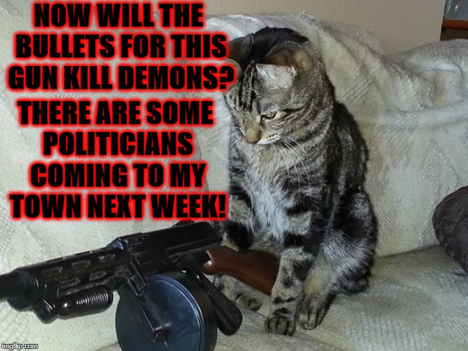 NOW WILL THE BULLETS FOR THIS GUN KILL DEMONS? THERE ARE SOME POLITICIANS COMING TO MY TOWN NEXT WEEK! | image tagged in assassin cat | made w/ Imgflip meme maker