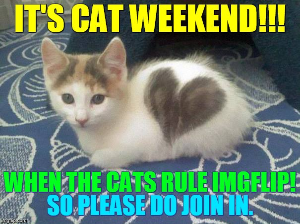 Cat Weekend, May 11-13, a Landon_the _memer, 1forpeace, and JBmemegeek event | IT'S CAT WEEKEND!!! SO PLEASE DO JOIN IN. WHEN THE CATS RULE IMGFLIP! | image tagged in memes,cat weekend,cats,rule,imgflip,join me | made w/ Imgflip meme maker