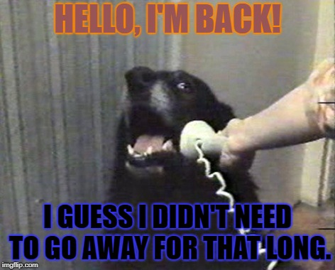 hello this is dog | HELLO, I'M BACK! I GUESS I DIDN'T NEED TO GO AWAY FOR THAT LONG. | image tagged in hello this is dog | made w/ Imgflip meme maker
