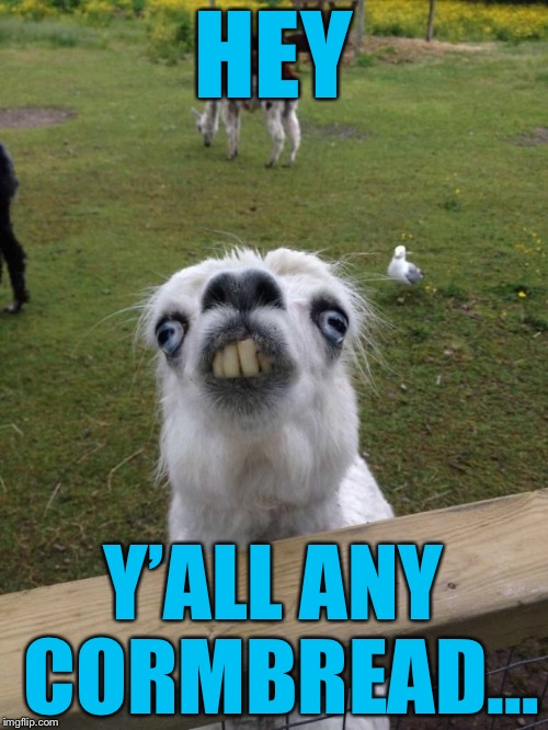 The goat of the day that has a weird Infestation of Urine Disease | HEY Y'ALL ANY CORMBREAD… | image tagged in llama weird face,meme,llama | made w/ Imgflip meme maker