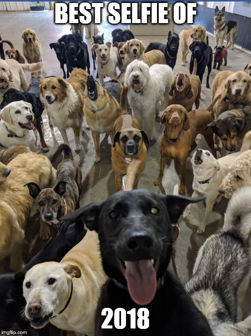 Dog Selfie | BEST SELFIE OF 2018 | image tagged in dogs | made w/ Imgflip meme maker