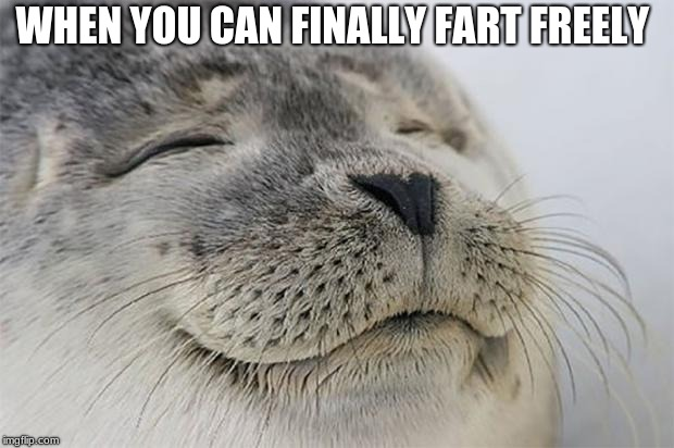 Satisfied Seal Meme | WHEN YOU CAN FINALLY FART FREELY | image tagged in memes,satisfied seal | made w/ Imgflip meme maker