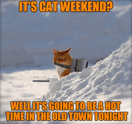 and I especially don't like those funky drapes you chose (Cat Weekend, a Landon_the_memer, 1forpeace, & JBmemegeek event) | IT'S CAT WEEKEND? WELL IT'S GOING TO BE A HOT TIME IN THE OLD TOWN TONIGHT | image tagged in flamethrower cat,memes,cat weekend,cats | made w/ Imgflip meme maker