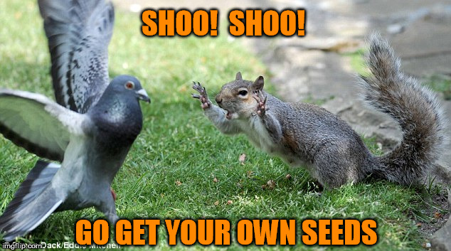 SHOO!  SHOO! GO GET YOUR OWN SEEDS | made w/ Imgflip meme maker