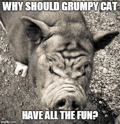 WHY SHOULD GRUMPY CAT HAVE ALL THE FUN? | made w/ Imgflip meme maker