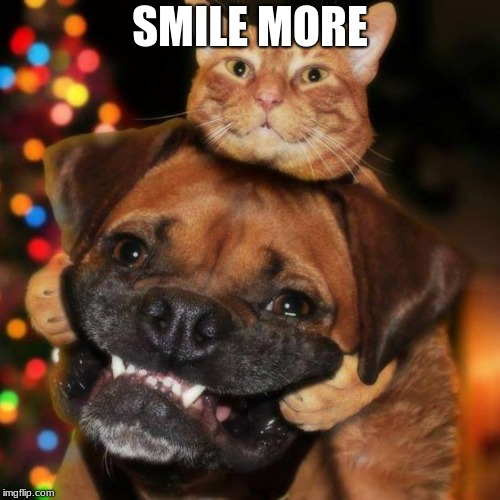 dogs an cats | SMILE MORE | image tagged in dogs an cats | made w/ Imgflip meme maker
