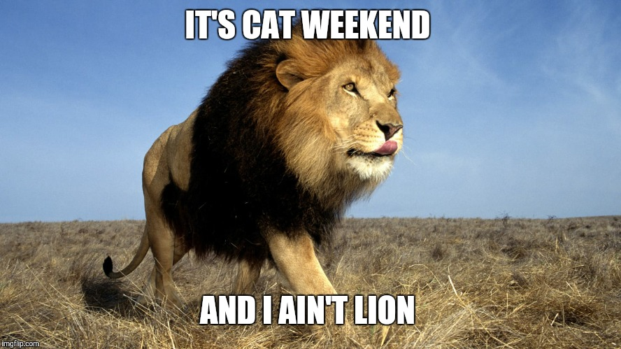Cat Weekend, May 11-13, a Landon_the_memer, 1forpeace, & JBmemegeek event! | IT'S CAT WEEKEND AND I AIN'T LION | image tagged in memes,cat weekend | made w/ Imgflip meme maker