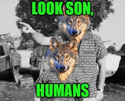 Human weekend- A Buggylememe weekend (12/05-13/05) | LOOK SON, HUMANS | image tagged in memes,look son,wolf,humans,buggylememe,human week | made w/ Imgflip meme maker