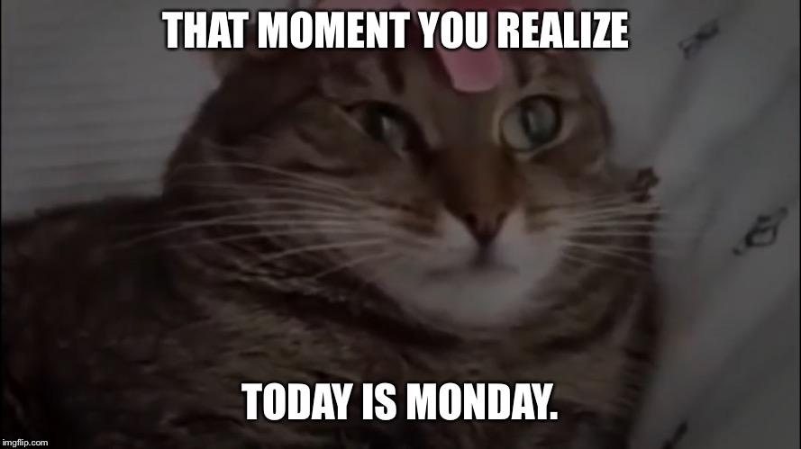 image tagged in meme,monday morning meme,funny cat,grumpy cat | made w/ Imgflip meme maker