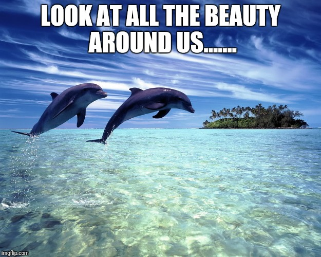 LOOK AT ALL THE BEAUTY AROUND US....... | image tagged in dolphin jump,beauty,dolphin,jump,ocean,sky | made w/ Imgflip meme maker
