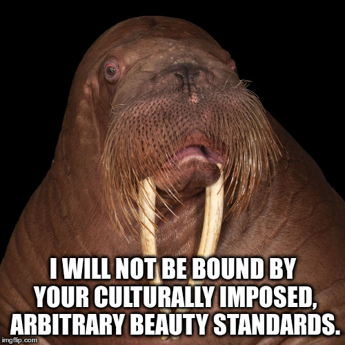 I will not be bound by your culturally imposed, arbitrary beauty standards | I WILL NOT BE BOUND BY YOUR CULTURALLY IMPOSED, ARBITRARY BEAUTY STANDARDS. | image tagged in national geographic walrus portrait,walrus,arbitrary beauty standards,culturally imposed,freedom | made w/ Imgflip meme maker