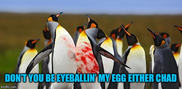 Penguin Bloodshed | DON'T YOU BE EYEBALLIN' MY EGG EITHER CHAD | image tagged in penguin bloodshed | made w/ Imgflip meme maker