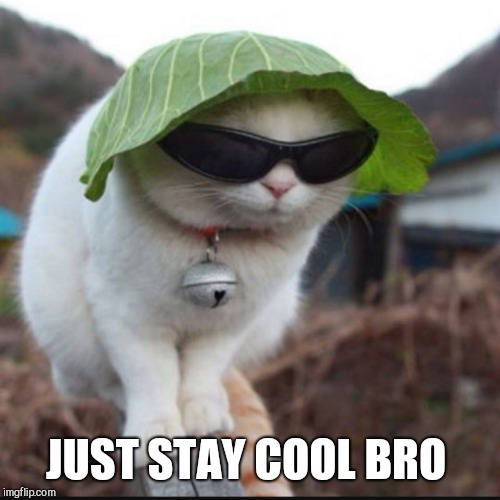JUST STAY COOL BRO | made w/ Imgflip meme maker