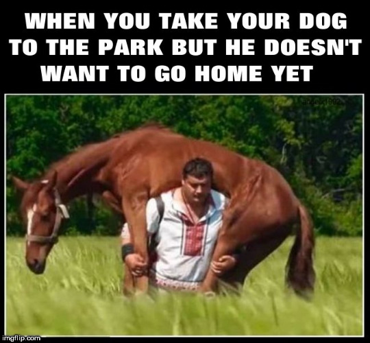 image tagged in dog,park,horse,dogs,pupper,horses | made w/ Imgflip meme maker