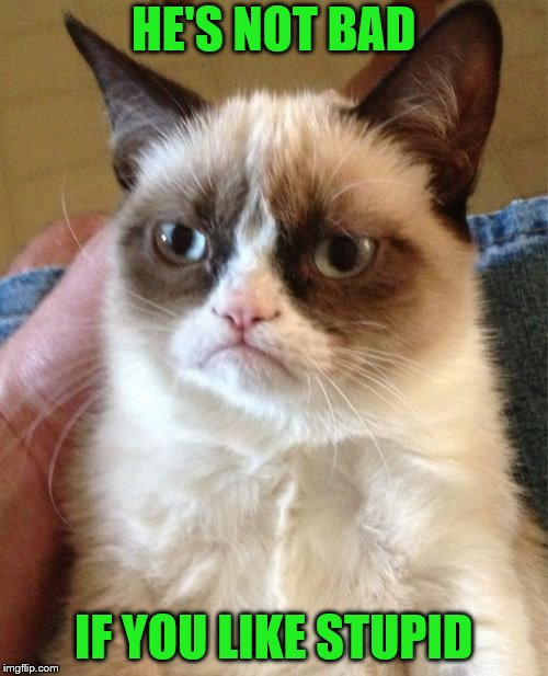Grumpy Cat Meme | HE'S NOT BAD IF YOU LIKE STUPID | image tagged in memes,grumpy cat | made w/ Imgflip meme maker