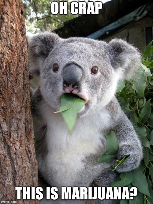 Australia drug laws | OH CRAP THIS IS MARIJUANA? | image tagged in memes,surprised koala,marijuana | made w/ Imgflip meme maker