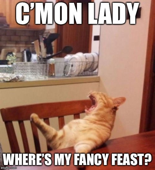 If Cats Could Talk | C'MON LADY WHERE'S MY FANCY FEAST? | image tagged in yelling cat,memes,funny,cat weekend | made w/ Imgflip meme maker