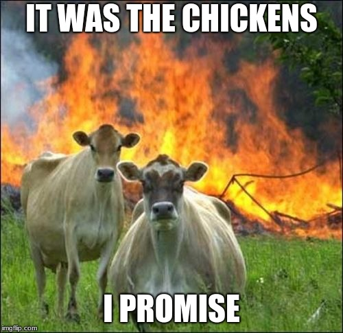 Evil Cows | IT WAS THE CHICKENS I PROMISE | image tagged in memes,evil cows | made w/ Imgflip meme maker