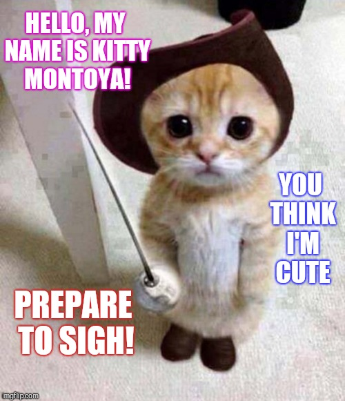 """It's Cat Weekend! Submit your cat memes and tag them """"cat weekend"""" May  11-13, a Landon_the_memer, 1forpeace, & JBmemegeek event! - Imgflip"""