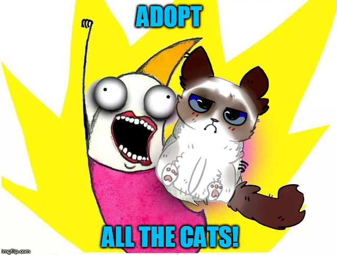 ADOPT ALL THE CATS! | made w/ Imgflip meme maker