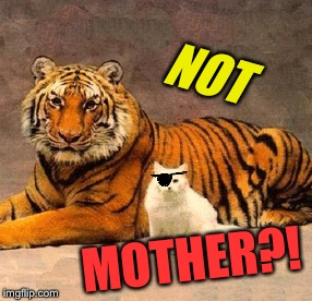 NOT MOTHER?! | made w/ Imgflip meme maker