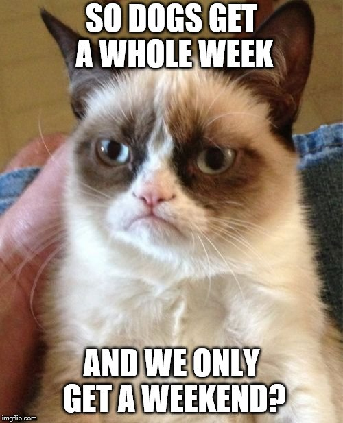 Cat Weekend through the 13th. | SO DOGS GET A WHOLE WEEK AND WE ONLY GET A WEEKEND? | image tagged in memes,grumpy cat,cat weekend | made w/ Imgflip meme maker