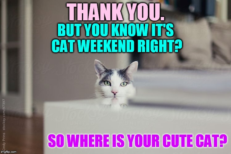 THANK YOU. SO WHERE IS YOUR CUTE CAT? BUT YOU KNOW IT'S CAT WEEKEND RIGHT? | made w/ Imgflip meme maker