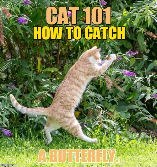Cat Weekend, May 11-13, a Landon_the_memer, 1forpeace, and JBmemegeek event | CAT 101 A BUTTERFLY. HOW TO CATCH | image tagged in memes,cat weekend,landon_the_memer,1forpeace,jbmemegeek,butterfly | made w/ Imgflip meme maker