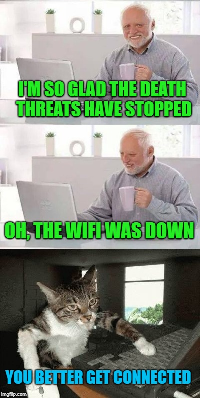 You've got mail |  I'M SO GLAD THE DEATH THREATS HAVE STOPPED; OH, THE WIFI WAS DOWN; YOU BETTER GET CONNECTED | image tagged in funny memes,cat,hide the pain harold,cat weekend | made w/ Imgflip meme maker