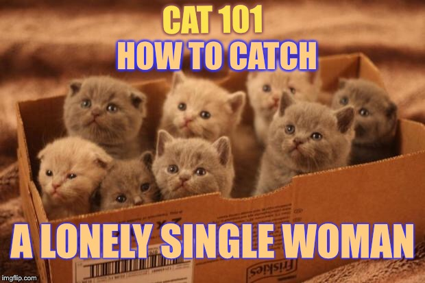 box o kittens |  HOW TO CATCH; CAT 101; A LONELY SINGLE WOMAN | image tagged in box o kittens,memes,cat weekend | made w/ Imgflip meme maker