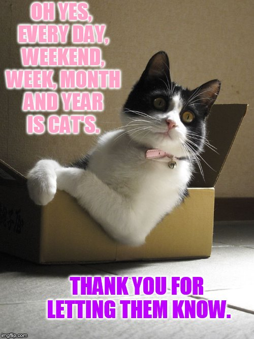 OH YES, EVERY DAY, WEEKEND, WEEK, MONTH AND YEAR IS CAT'S. THANK YOU FOR LETTING THEM KNOW. | made w/ Imgflip meme maker