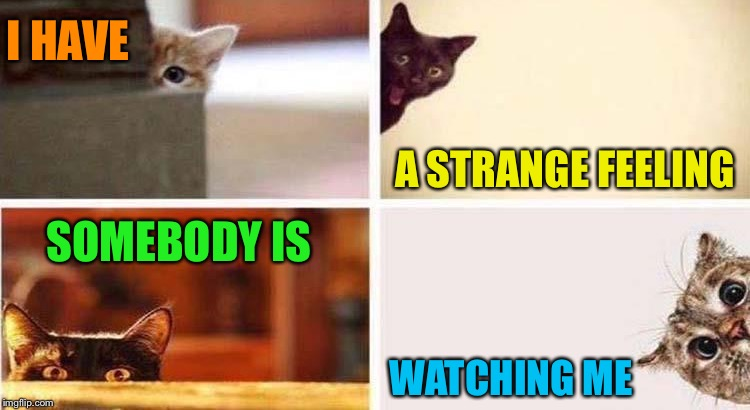 Catanoia. | I HAVE A STRANGE FEELING SOMEBODY IS WATCHING ME | image tagged in landon_the_memer,1forpeace,jbmemegeek,cat weekend,cats,memes | made w/ Imgflip meme maker