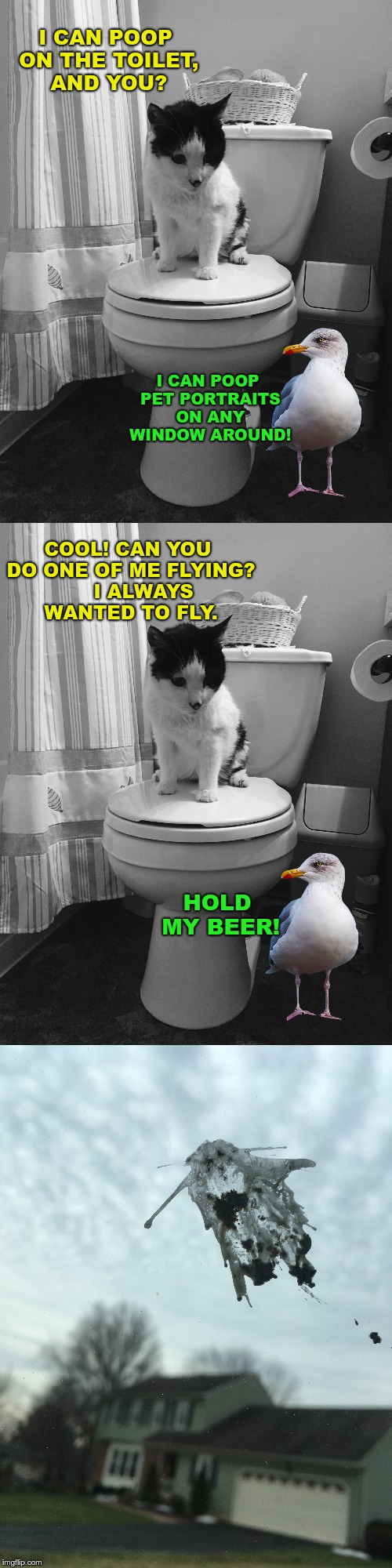 Cat Weekend! An original Poop-casso work of art :-) | I CAN POOP ON THE TOILET, AND YOU? COOL! CAN YOU DO ONE OF ME FLYING?     I ALWAYS WANTED TO FLY. I CAN POOP PET PORTRAITS ON ANY WINDOW ARO | image tagged in memes,cat weekend | made w/ Imgflip meme maker