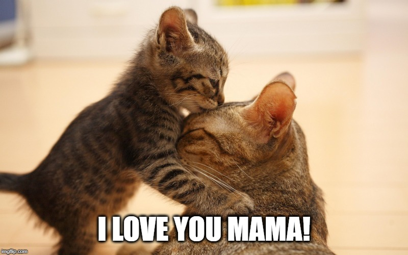 I LOVE YOU MAMA! | image tagged in mothers day,i love you,kitties,cats,love,happy mother's day | made w/ Imgflip meme maker