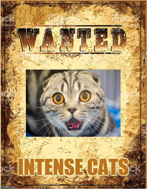INTENSE CATS | made w/ Imgflip meme maker