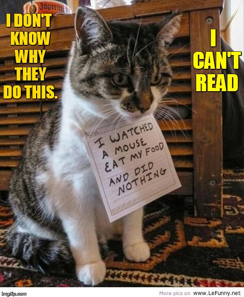 Cat Weekend, May 11-13, a Landon_the_memer, 1forpeace, and JBmemegeek event |  I DON'T KNOW WHY THEY DO THIS. I  CAN'T READ | image tagged in memes,cat weekend,landon_the_memer,1forpeace,jbmemegeek,why would they do this | made w/ Imgflip meme maker