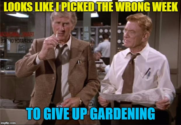 LOOKS LIKE I PICKED THE WRONG WEEK TO GIVE UP GARDENING | made w/ Imgflip meme maker
