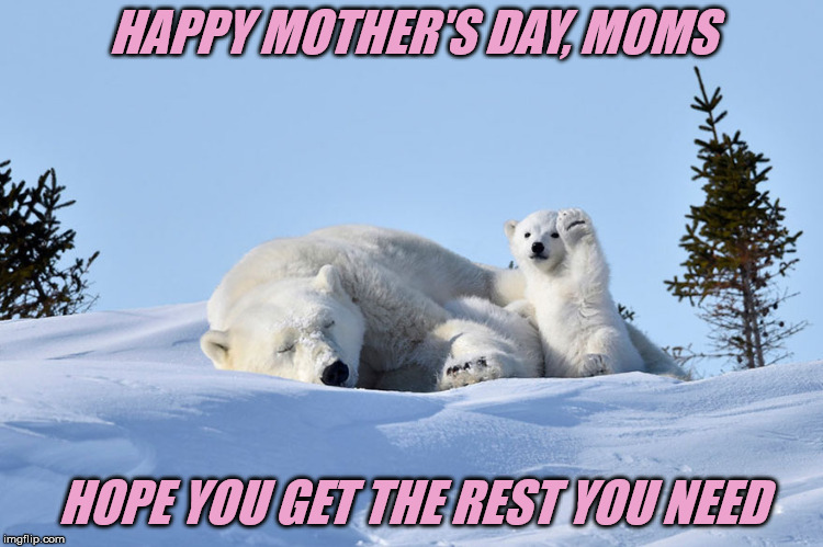 It'll be another year til your next rest day | HAPPY MOTHER'S DAY, MOMS HOPE YOU GET THE REST YOU NEED | image tagged in mothers day,polar bears | made w/ Imgflip meme maker